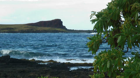 Shot of the Hawaiian shoreline with volcanic rock and a tree in the foreground Footage