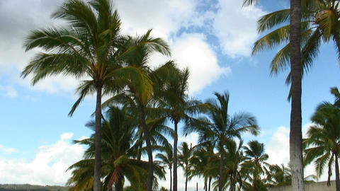 Palm trees in the breeze with a clouded blue sky in Hawaii Footage