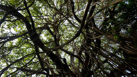Twisted lianas on wet exotic plants and trees in... Stock Video Footage