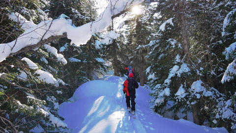 Men are skitouring in deep snow forest Live Action