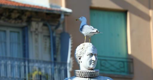 Gull On Statue Head Stock Video Footage