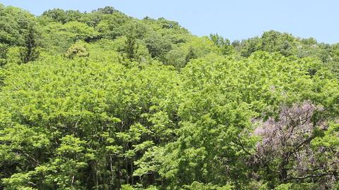 新緑の山 ライブ動画