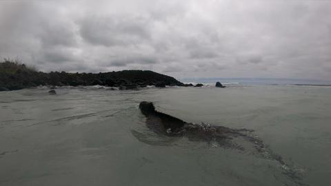 Animals on Galapagos - Marine Iguana swimming underwater - Iguanas Footage