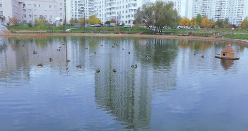 Ducks in a pond in the park Stock Video Footage