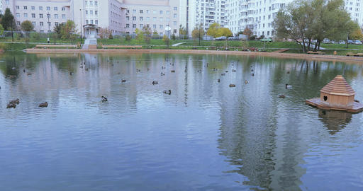 Ducks in a pond in the park ビデオ