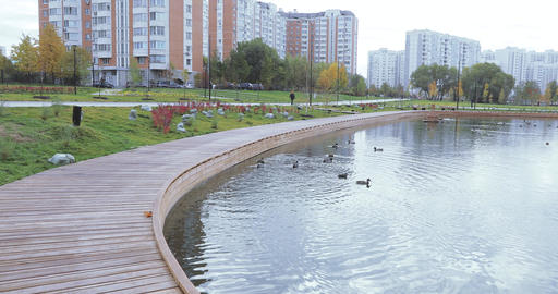 Ducks in a pond in the park Footage