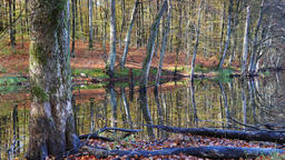 Swampy forest at fall. Slow zoom out Live Action