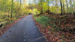 Bicycle drive through the forest. Autumn ビデオ
