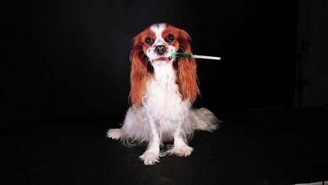 Injection syringe vaccination pet vet dog veterinary sick disease avoid prevent Live Action