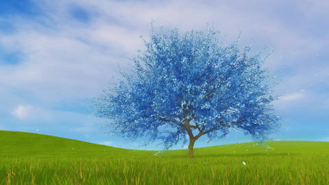 Surreal blue sakura cherry tree in blossom 3D animation Stock Video Footage