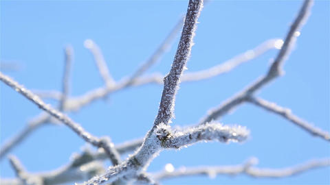 Frost on the branches of Apple trees in motion in severe frost HD Live Action