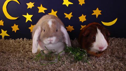 Pets animals at night lop rabbit concept ビデオ