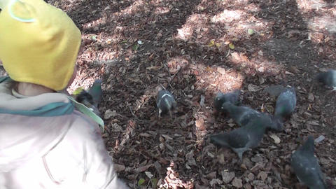 small boy feed pigeons Stock Video Footage