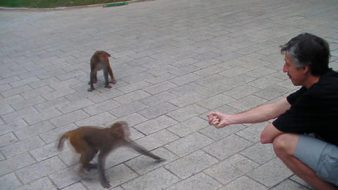 man with monkey Footage