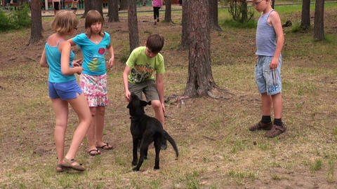 Children play with a dog Stock Video Footage