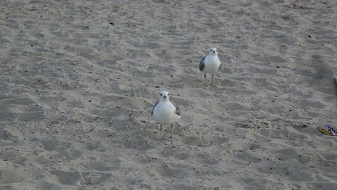 Seagulls Stock Video Footage