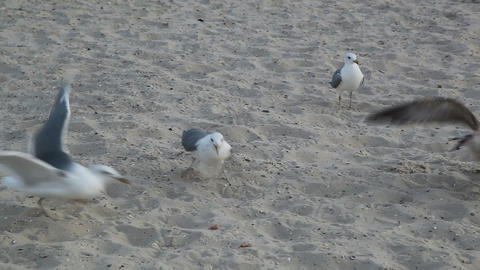 Seagulls Stock Video Footage