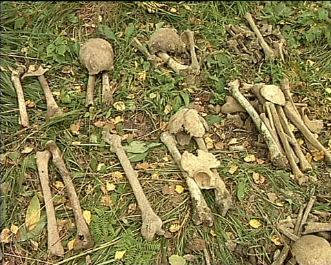 remains of dead soldiers Stock Video Footage