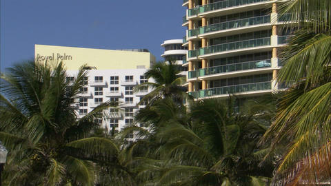Hotels and palm trees in Miami ビデオ
