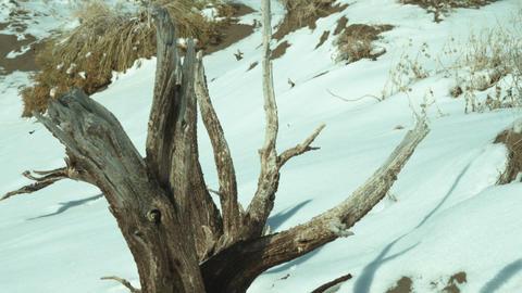 Tilt footage of tree stump in snowy countryside Footage