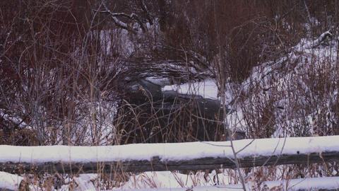 Frozen creek under snowy trees Footage