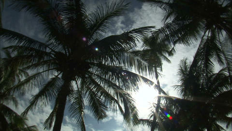 Looking up at palm tree tops and the sunny sky ビデオ