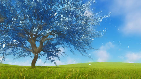 Sakura cherry tree in blossom fantasy 3D animation Live Action
