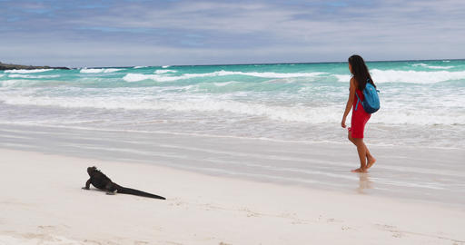 Animals - Vacation travel woman on beach with Iguana... Stock Video Footage