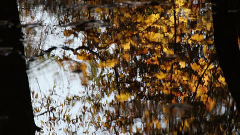 Maple leaves water reflections ライブ動画