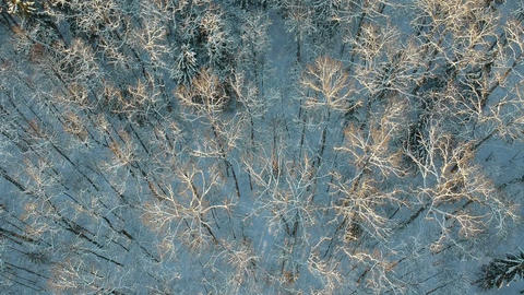Beautiful snowy winter wild forest, aerial Footage