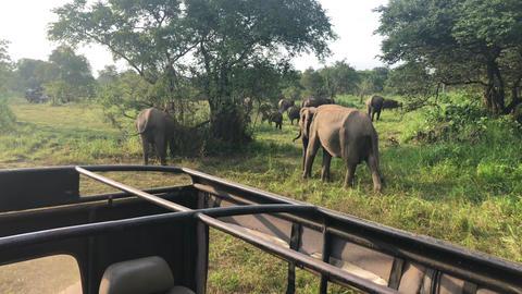 Wild elephants eating grass, Hurulu Eco Park, Sri Lanka Stock Video Footage