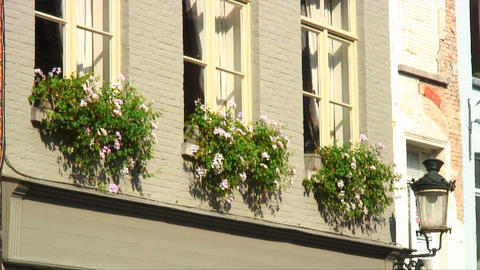 Flowering plants hanging outside windows Footage