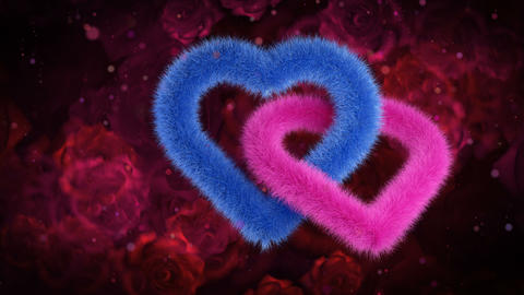Union of gender hearts, blue pink on red roses bg Animation