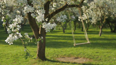 Swing under blossoming apple trees GIF
