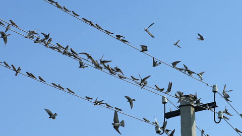 Birds sit on wires and fly away, Slow Motion Footage