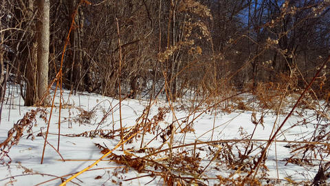 Snowy Forest Field With Gentle Wind. Snow Field With... Stock Video Footage