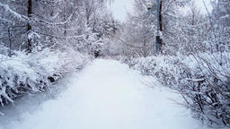 The winter road in the park ビデオ