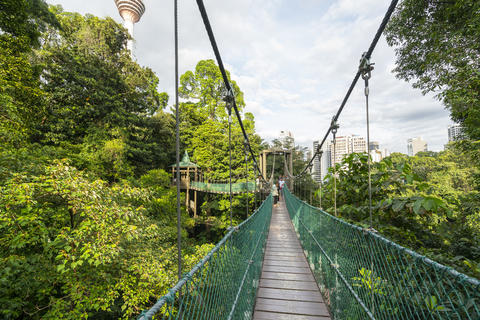 Bukit Nanas Forest Reserve in Kuala Lumpur フォト