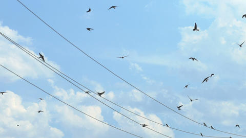 Sparrows fly next to electrical wires Footage