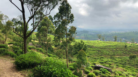 Nuwara Eliya tea plantation in Sri Lanka Footage