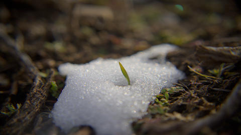 Time-lapse shot of snow melting on grass in Utah Footage