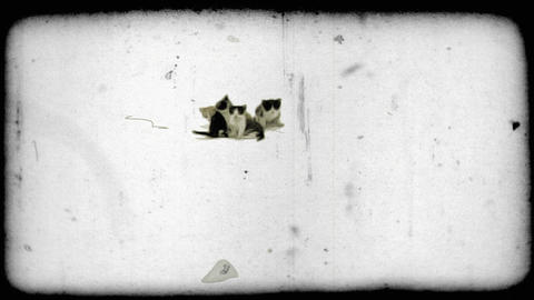 Four kittens together. Vintage stylized video clip Footage