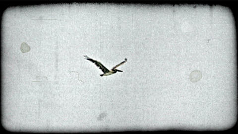 Flying pelican. Vintage stylized video clip Footage