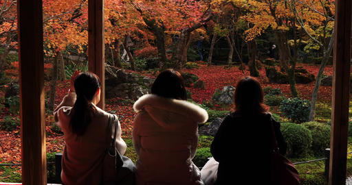 Red leaves at the traditional park at Enkouji temple in Sakyo district Kyoto Live Action