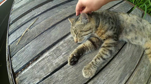 Girl strokes cat lying wooden surface of old wooden planks Footage