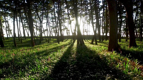 Sunshine through the Trees, Janghang Songlim Mountain Forest Resort, Seocheon, Live Action