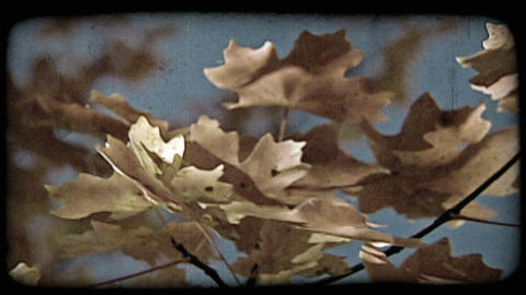 Colored leaves in wind. Vintage stylized video clip Footage