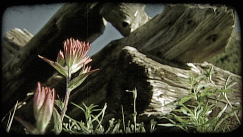 Flower and logs. Vintage stylized video clip ライブ動画
