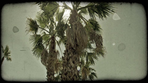 Low angle footage of palm trees growing in road median. Vintage stylized video c Footage