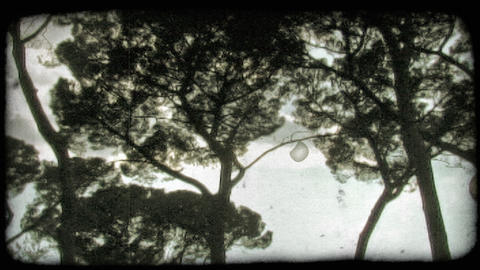 Trees and clouds. Vintage stylized video clip Footage